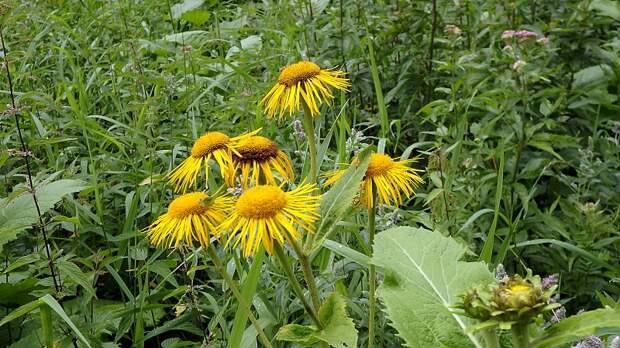 7 интересных и немного диковинных растений для сада