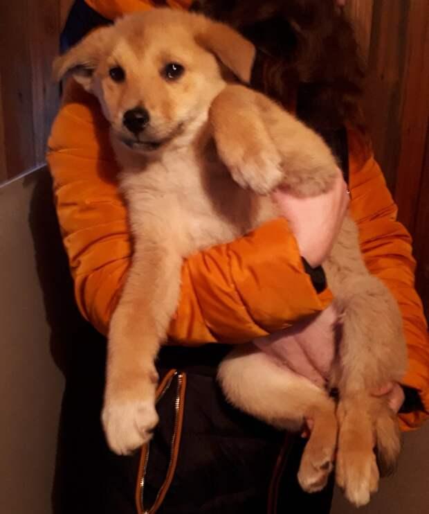 Волонтер пристроила щенка, но внезапный звонок хозяев поразил ее история, щенок