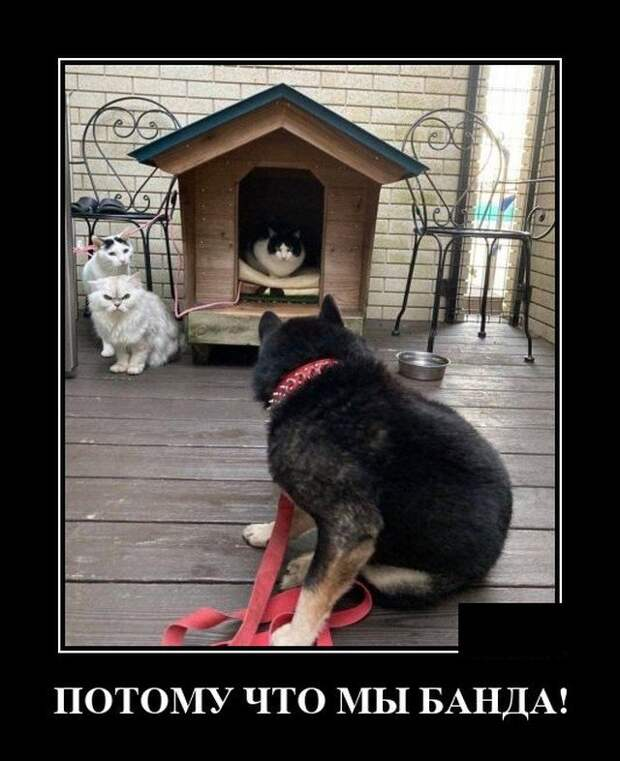 Демотиватор про собаку и котов