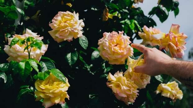 Цветы могут чувствовать, как вы их трогаете - и это не всегда им нравится!