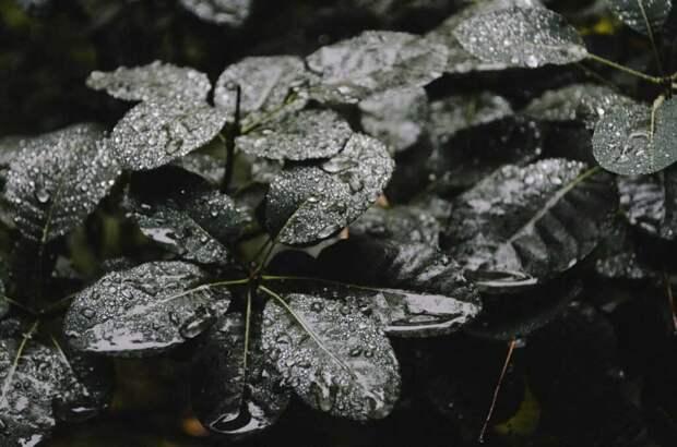 Открыта молекула, превращающая растения в «зомби»