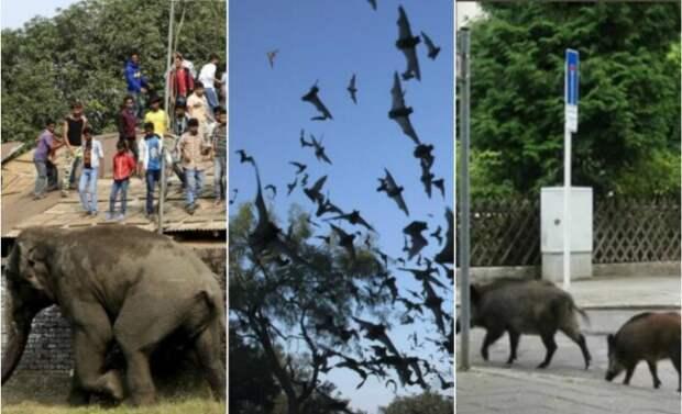 Слоны-мстители и змеи в ванной: Города, которые постоянно атакуют животные