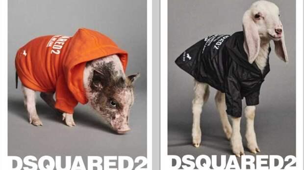 Модный бренд выпустил одежду для поросят, козочек и других животных