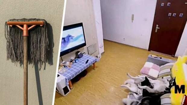 Хозяин показал на видео, что его хаски делают дома одни. И это повод для зависти: псы круче любого клининга