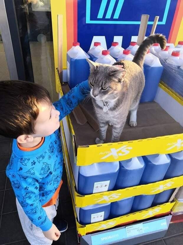 Кот, которого потеряли 2 года назад, оказался звездой местного супермаркета