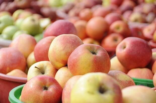 Более 9000 тонн фруктов и ягод собрали на Кубани