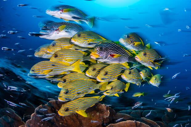 30 потрясающих подводных снимков конкурса OCEAN ART 2019 (36 выпуск Подводного мира)