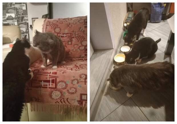 «Унас уже было двое питомцев, нопрочитав про кота, которого собирались усыпить, несмогли остаться равнодушными»