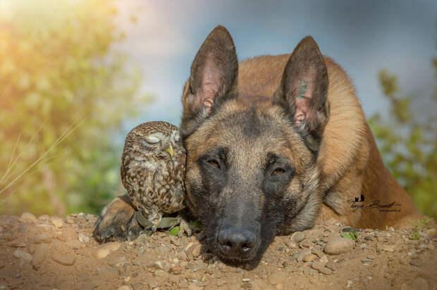Такая милая дружба пса исовушки