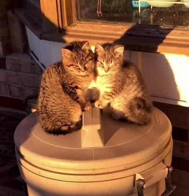 котята на мусорном ведре