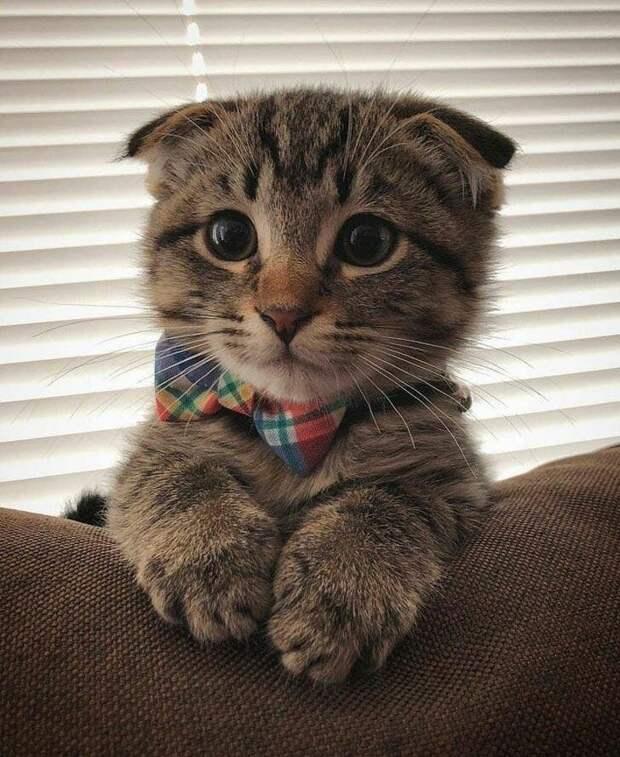 Эти ушки и лапки просто очаровательны животные, коты, кошки, подборка, смешное, собаки, фото, юмор