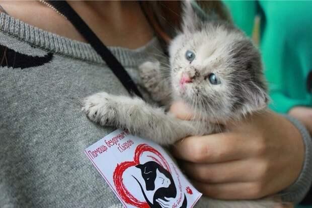 в г. Сызрань ( Самарская область) создана инициативная группа помощи бездомным животным