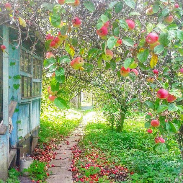 как я снимала дачу в Подмосковье. часть 3. ПЕРВЫЕ ГРИБЫ, первые ягоды