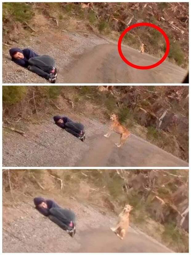 Девушка легла на землю и перестала подавать признаки жизни… Смотрите, что произошло уже через минуту!