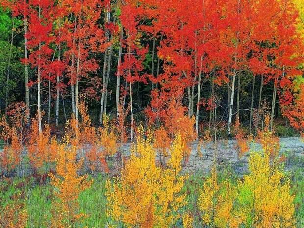Кроет уж лист золотой  влажную землю в лесу...