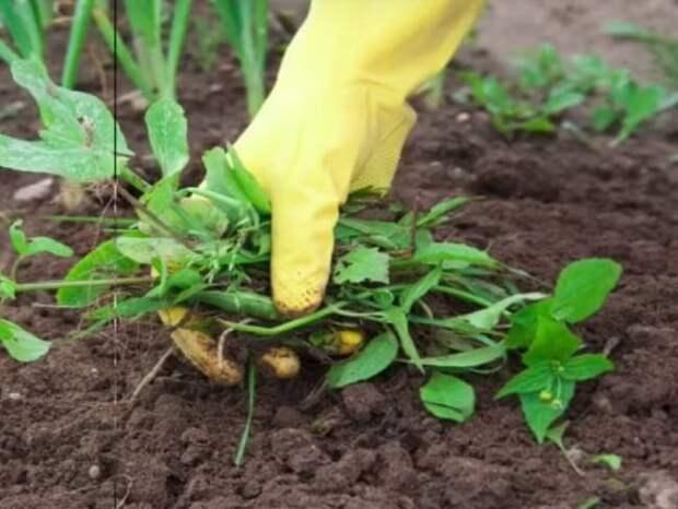 Чайные пакетики в саду: самые эффективные и неожиданные способы