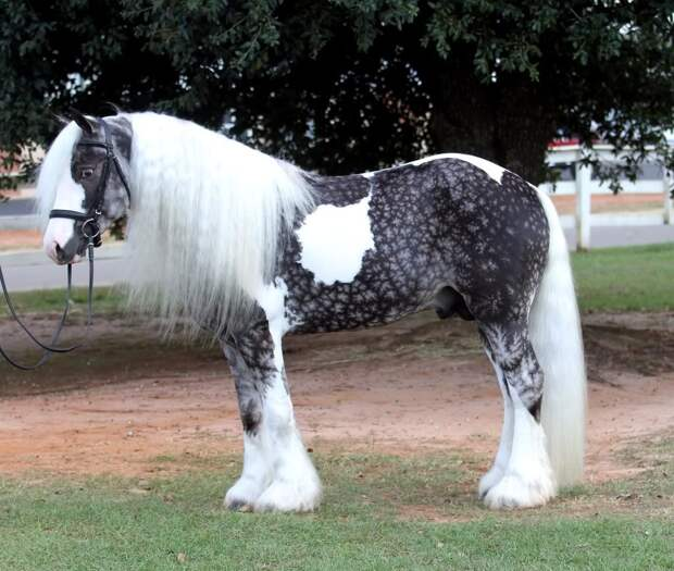 23 раза, когда кто-то увидел лошадь - и не поверил, что такая красота существует