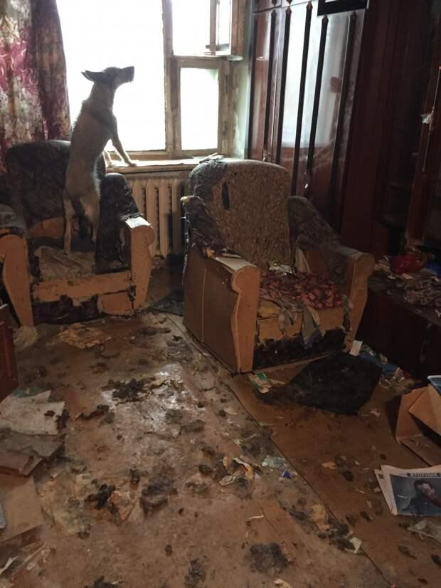 Дело якутских волонтеров: человек просто растворился в воздухе… А собаки остались!