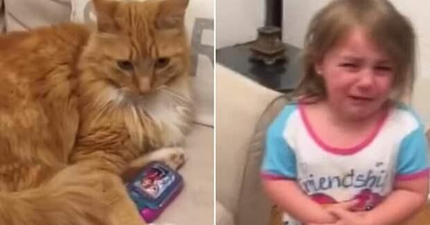 Видео: кошка отняла у ребенка игрушечный телефон и отказывается отдавать видео, вирусное видео, дети и кошки, животные, забавное видео, приколы, рыжая наглая морда, юмор