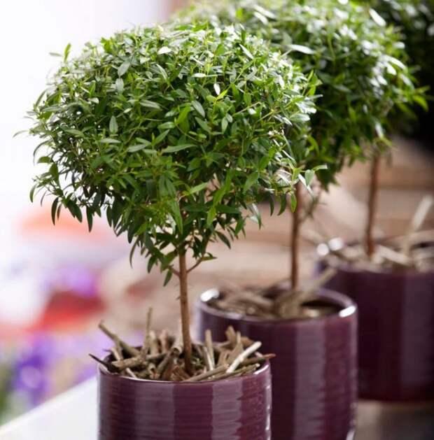 10 комнатных растений, которые приносят семье счастье, покой и умиротворение