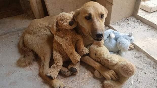 Котёнок-сирота стал лучшим другом собаки, потерявшей щенков, и это так трогательно, что готовьте платочки