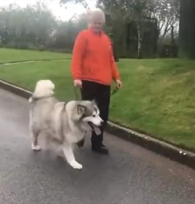 Пес на прогулке