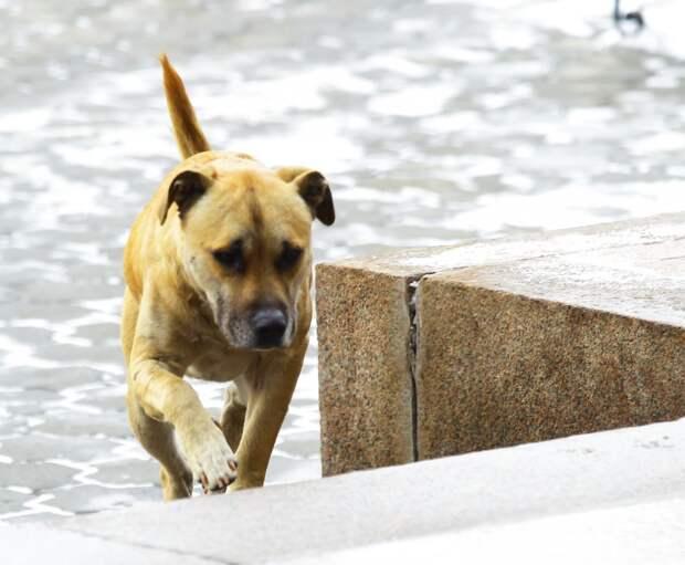 Бездомных животных подсчитают в Иркутской области