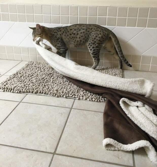 Удивительные и забавные привычки домашних животных