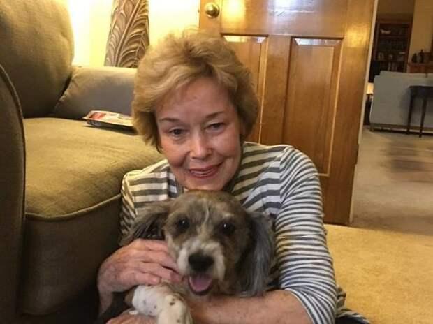 13-year-old-dog-dumped-on-lawn-with-a-sad-note-seeks-help-5afe469f2cda7__605