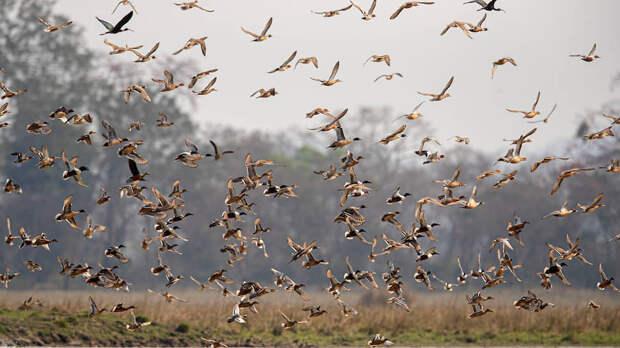 Гувахати, Индия. Перелетные птицы в природном заповеднике