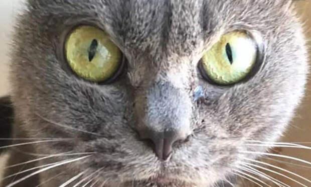Извиняясь перед кошкой, смотрите ей в глаза