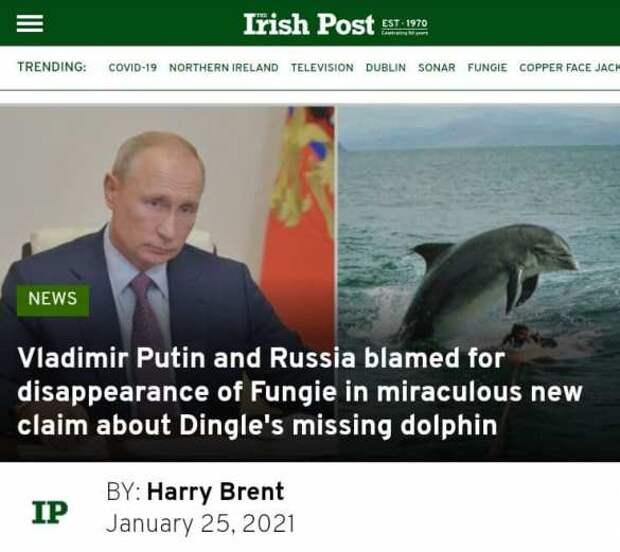"""В Ирландии обвинили Путина во """"вмешательстве"""" в жизнь местных дельфинов"""