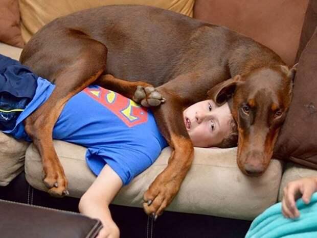 20 наглых собак, которые плевать хотели на чье-либо личное пространство