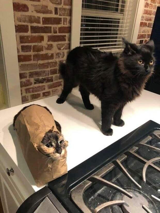 Есть два типа людей ... животные, коты, кошки, подборка, смешное, собаки, фото, юмор