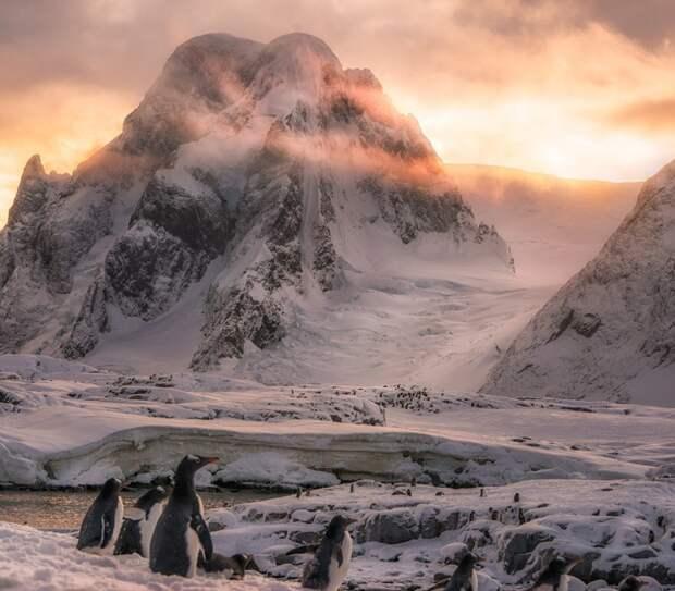 Удивительная Антарктика в фотографиях Josselin Cornou