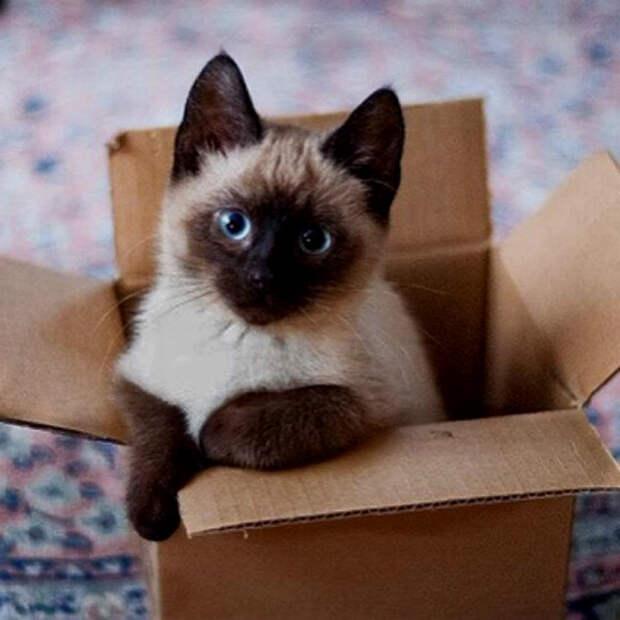 Милый котенок под дверью стал неожиданным сюрпризом для Дианы