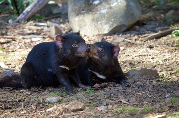 18 фактов о животных, которые стоят того, чтобы немножко посидеть, разинув рот