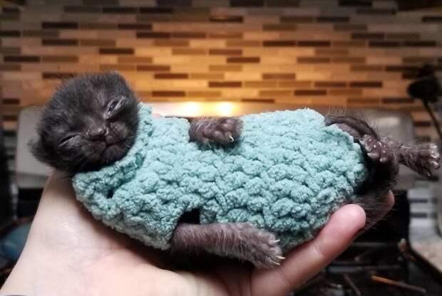 По улице ползла миниатюрная кошечка размером с ладошку