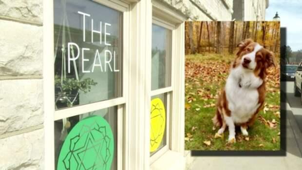 Собака угнала автомобиль владельца и врезалась в музей в США