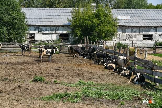 Сельхозпредприятие работает в Тавре с советского времени