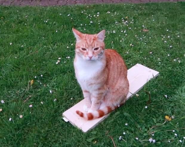Котик, кстати, тоже был вовлечён в процесс и стремился помочь. Все мы знаем, как коты обычно помогают в мире, животные, забота, история, кот, люди