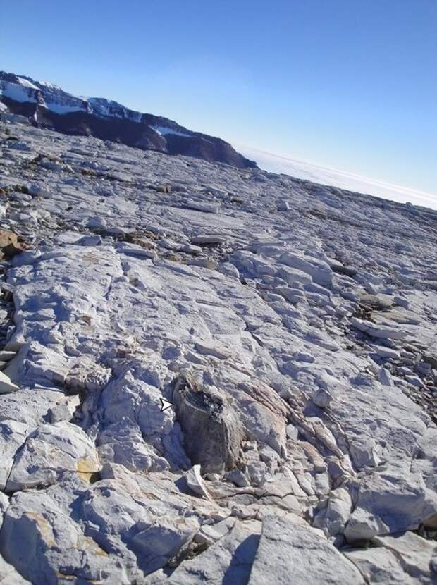 Что осталось от древних лесов Антарктиды: рассказали ученые