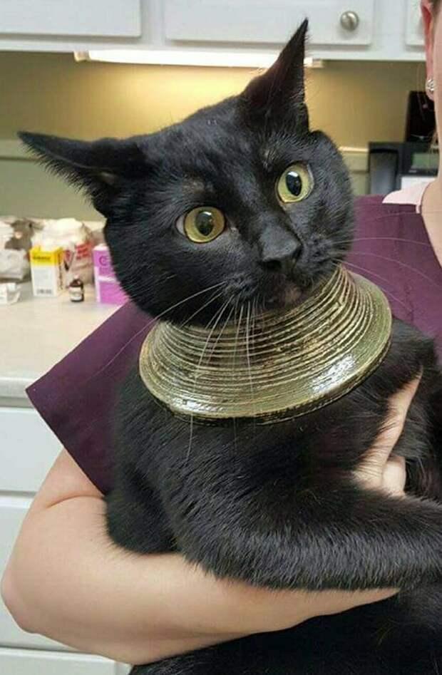 А теперь, я как египетская сила! животные, застряли, любопытные, смешные, фото