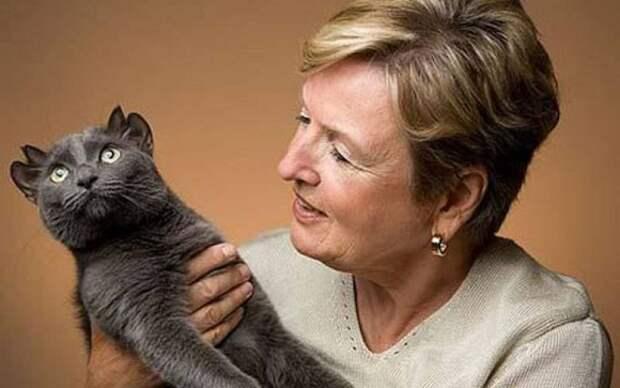 Кот с необычной внешностью и четырьмя ушами по имени Йода