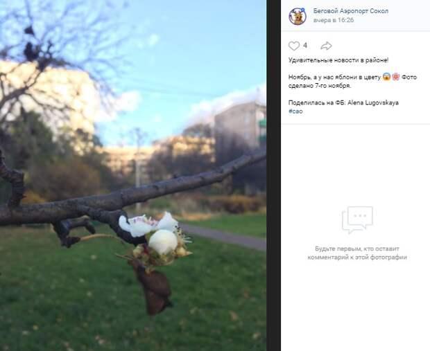 Фото дня: ноябрьские яблони на Соколе