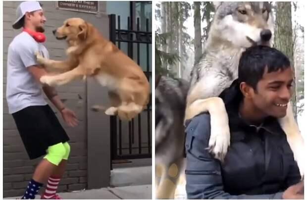 Трогательная реакция животных, которые встретились с хозяевами спустя долгое время