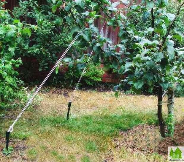 Приемы для ускорения плодоношения садовых культур