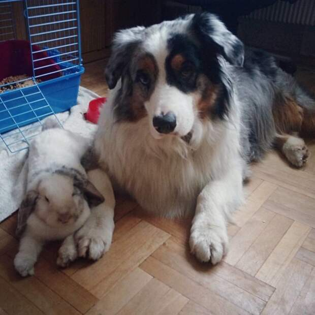 а здесь даже собака с кроликом смогли найти общий язык дружба, животные, коты, кролик, попугай, собака, черепаха