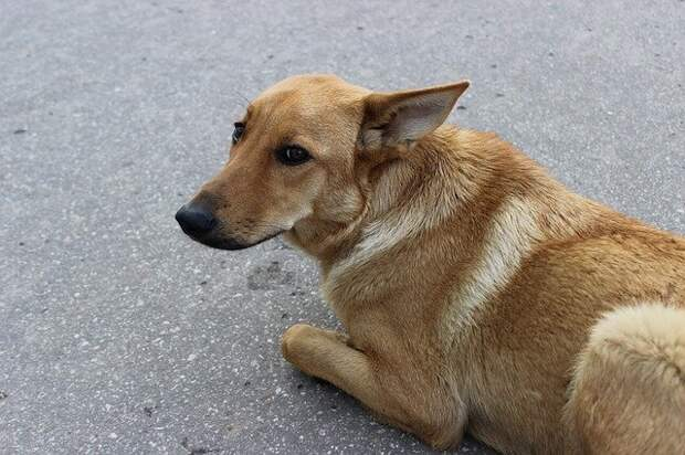 Потрёпанная собака бежала за машиной три километра в надежде обрести новых хозяев. Водитель не выдержал и нажал на тормоза