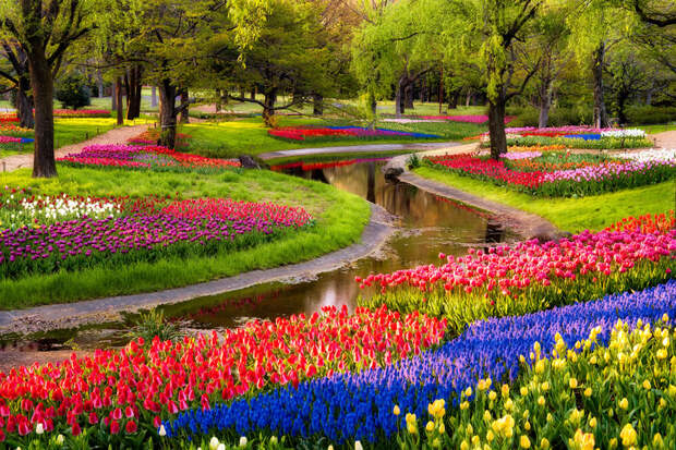 tulips30 Самые яркие тюльпаны со всего света